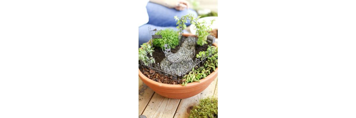 Mini Gardening – der neue Trend für Hobbygärtner - Minigärten – der neue Trend für Hobbygärtner