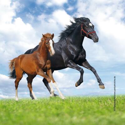 Pferd und Fohlen -  20 Servietten, 33 x 33 cm
