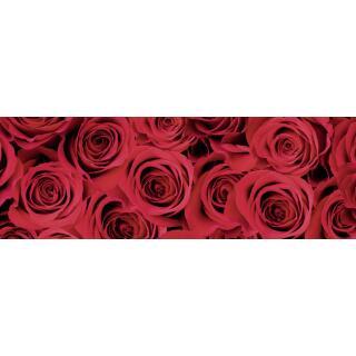 Motiv-Fotokarton Rosen rot (64), 300 g/m²,  ca. 50 cm x 70 cm